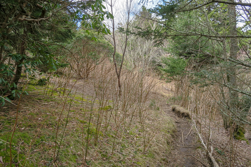 Shining Creek Trail -- 5,650'