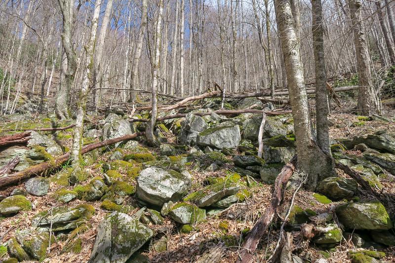 Shining Creek Trail -- 3,850'