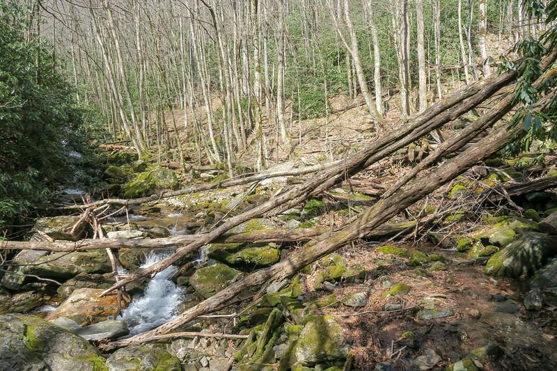 Shining Creek Trail -- 4,040'