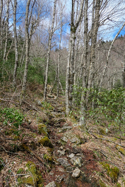 Shining Creek Trail -- 5,450'