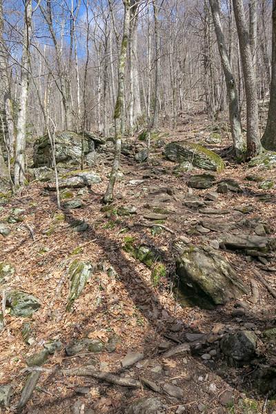 Shining Creek Trail -- 4,700'