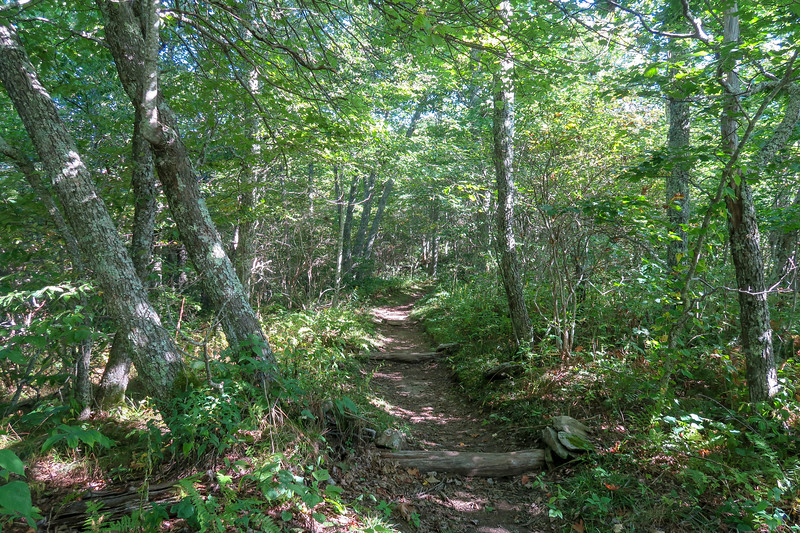 Mountains-to-Sea/Shut-In Trail -- 5,280'