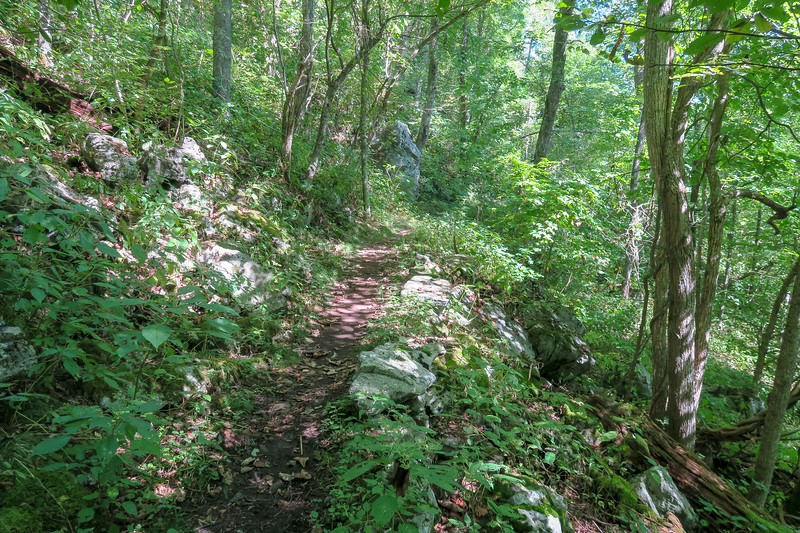 Mountains-to-Sea/Shut-In Trail -- 4,180'