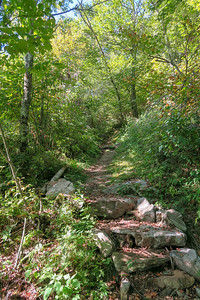 Mountains-to-Sea/Shut-In Trail -- 5,200'
