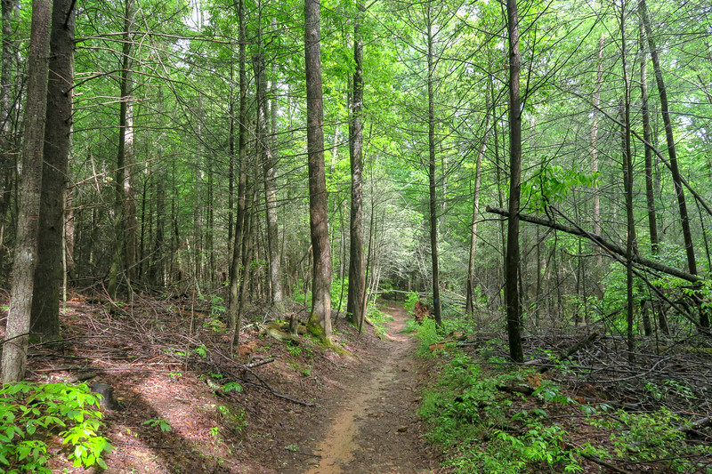 Sidehill Connector Trail