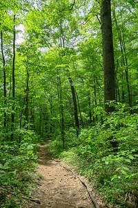 Sidehill Trail -- 2,750'