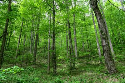 Sidehill Trail -- 2,720'
