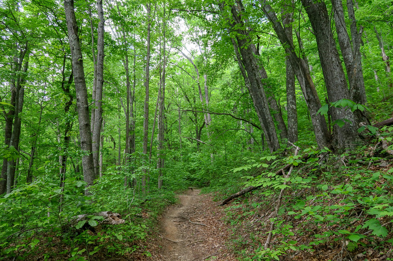 Sidehill Trail -- 2,790'