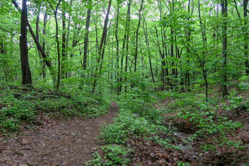 Sleepy Gap Trail -- 2,750'