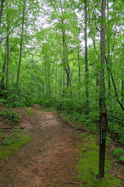 Sleepy Gap Trail @ Forest Road 479M Crossing -- 2,540'