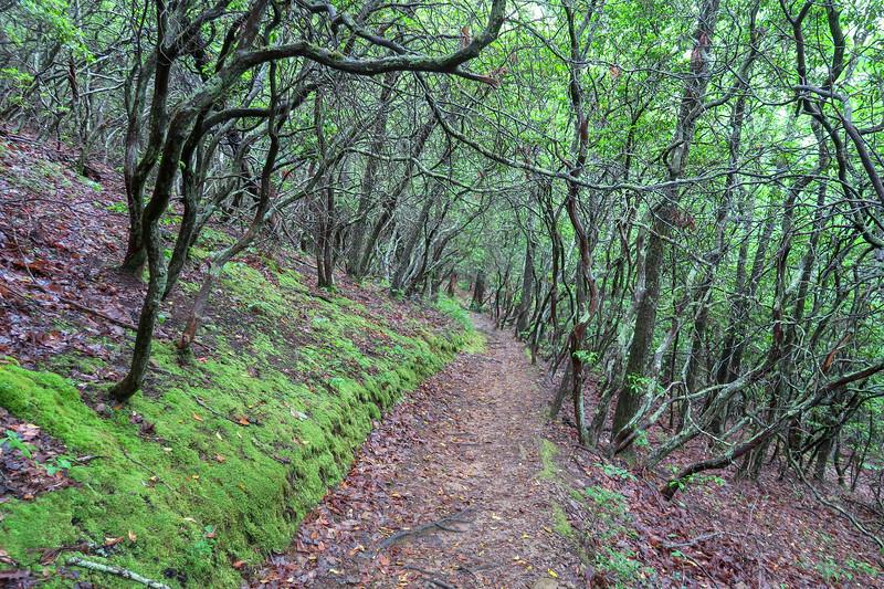 Sleepy Gap Trail -- 2,820'