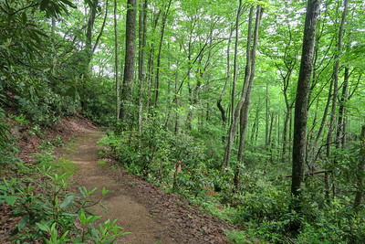 Sleepy Gap Trail -- 2,640'
