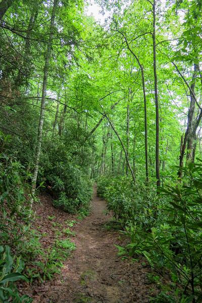 Sleepy Gap Trail -- 2,620'