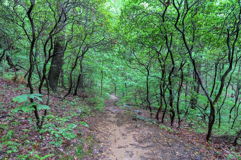 Sleepy Gap Trail -- 2,780'