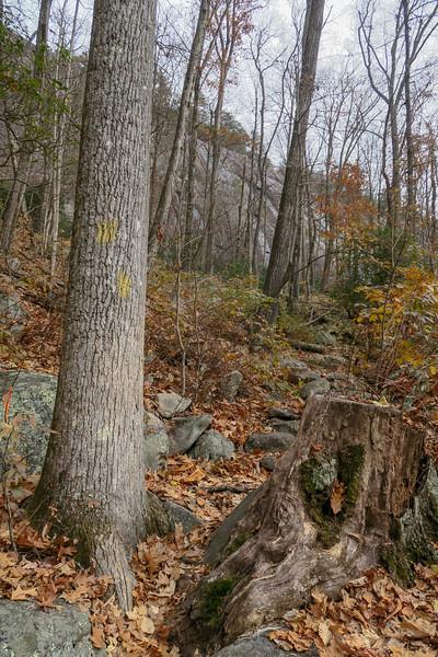 Slick Rock Falls Trail -- 3,180'