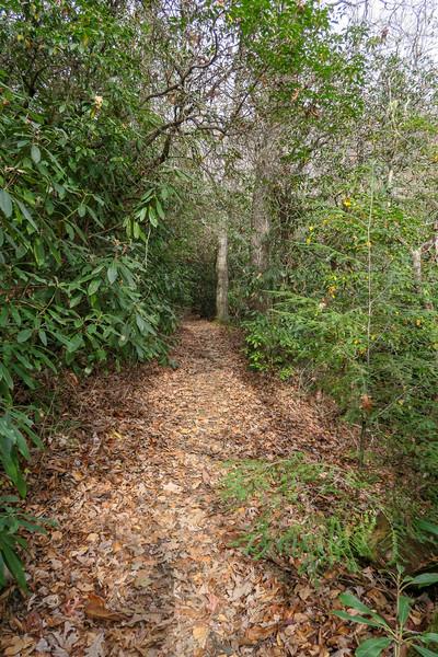 Slick Rock Falls Trail -- 2,860'