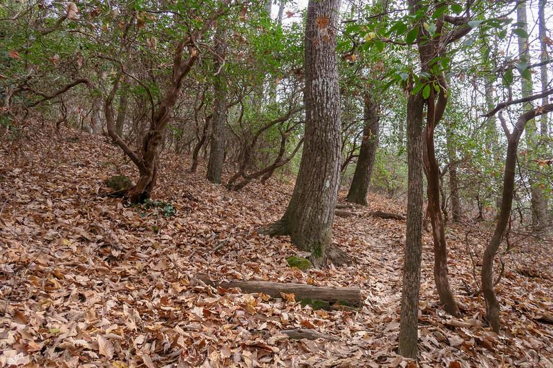 Slick Rock Falls Trail -- 3,080'
