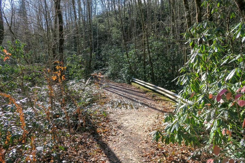 South Mills River Trail @ Concrete Bridge -- 3,100'