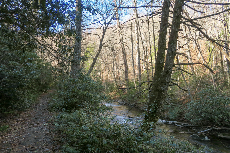 South Mills River Trail -- 3,150'