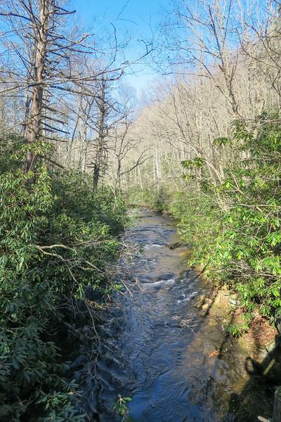 South Fork Mills River -- 3,100'