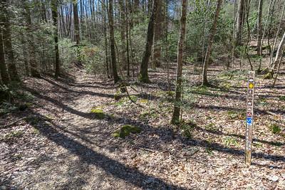 Spencer Branch Trail @ F.R. 5097 -- 2,750'