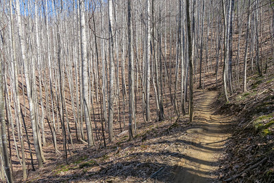 Spencer Branch Trail -- 2,940'