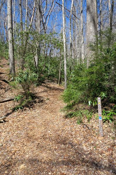 Spencer Branch Trail/F.R. 142 Junction -- 2,460'