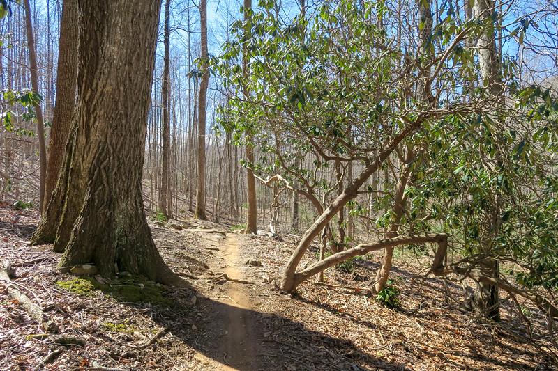 Spencer Branch Trail -- 2,880'
