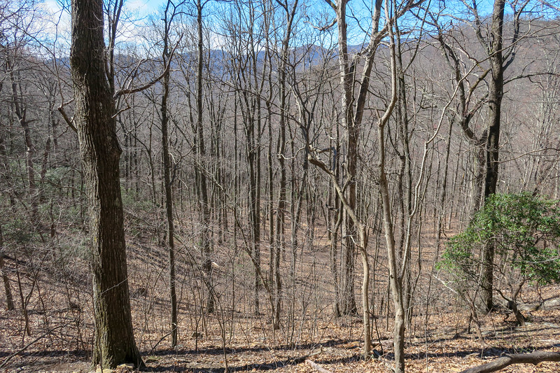Spencer Branch Trail -- 3,200'