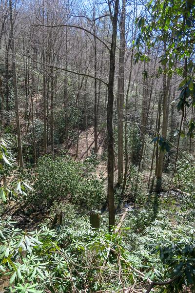 Spencer Branch Trail -- 2,640'