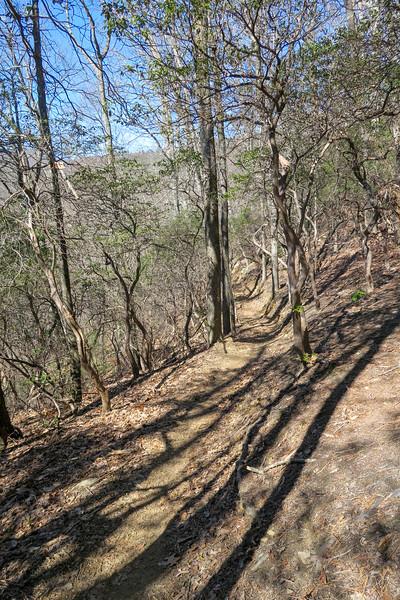 Spencer Branch Trail -- 3,300'