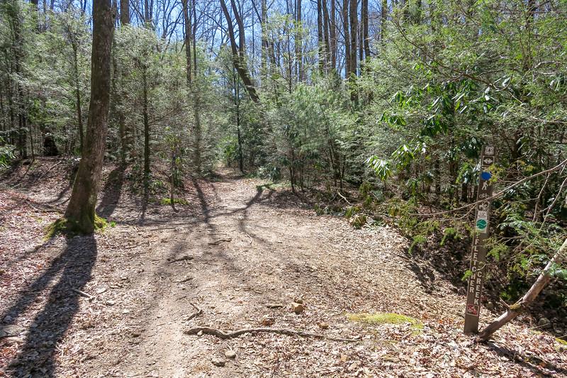 Spencer Branch/Fletcher Creek Trail Junction -- 2,600'
