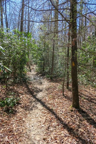 Spencer Branch Trail -- 2,610'