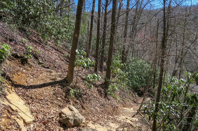 Spencer Branch/Big Creek Trail Junction -- 2,500'