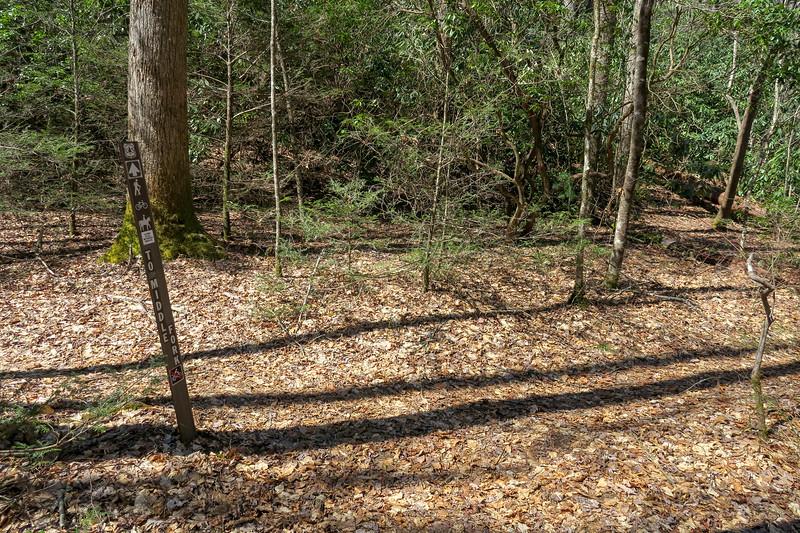 Spencer Branch Trail -- 2,600'