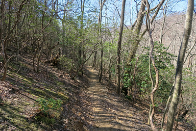 Spencer Branch Trail -- 3,160'