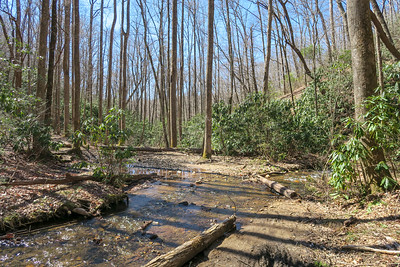 Spencer Branch Trail -- 2,700'