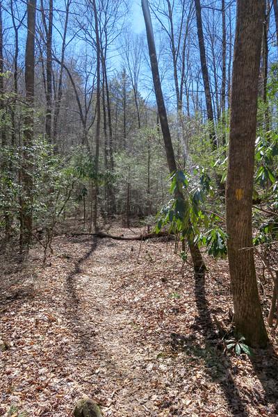 Spencer Branch Trail -- 2,590'