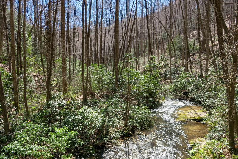 Spencer Branch Trail -- 2,550'