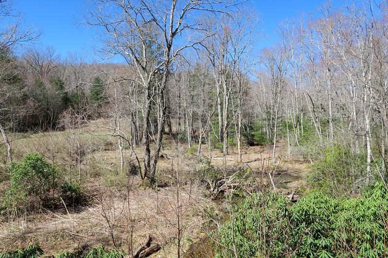 Spencer Branch Trail -- 2,650'