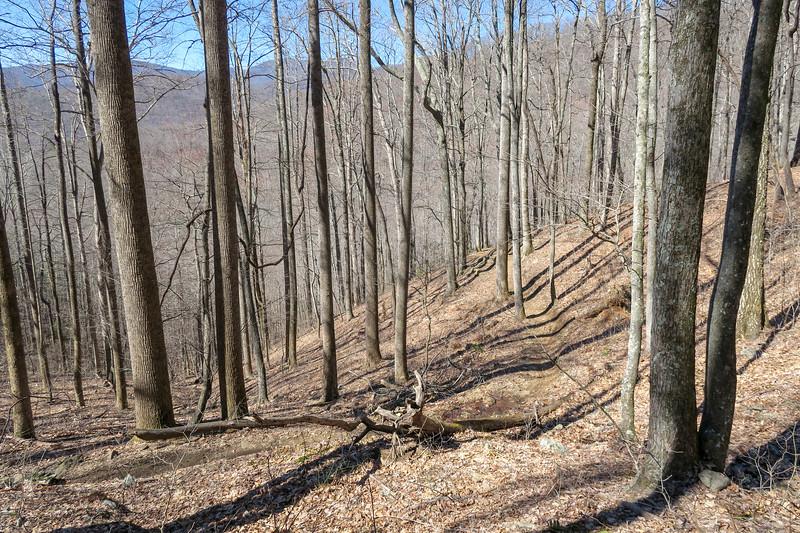 Spencer Branch Trail -- 2,980'
