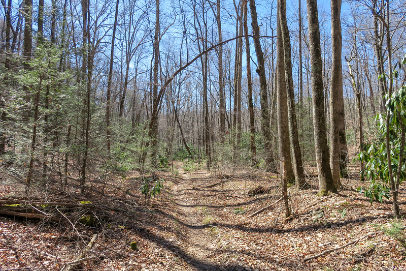Spencer Branch Trail -- 2,690'