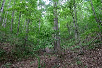 Spencer Gap Trail -- 3,200'