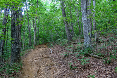 Spencer Gap Trail -- 3,240'