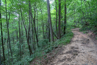Spencer Gap Trail -- 2,940'