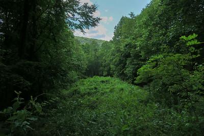 Spencer Gap Trail -- 3,050'