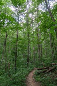 Spencer Gap Trail -- 3,270'