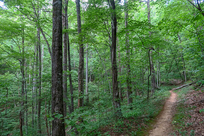 Spencer Gap Trail -- 3,220'