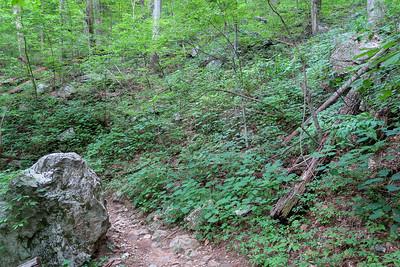Spencer Gap Trail -- 3,300'