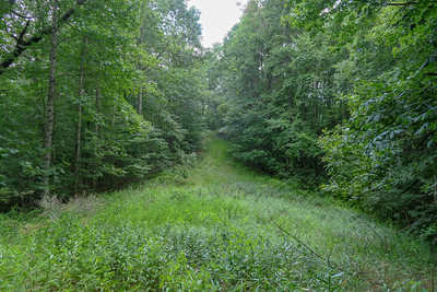 Spencer Gap Trail -- 2,920'